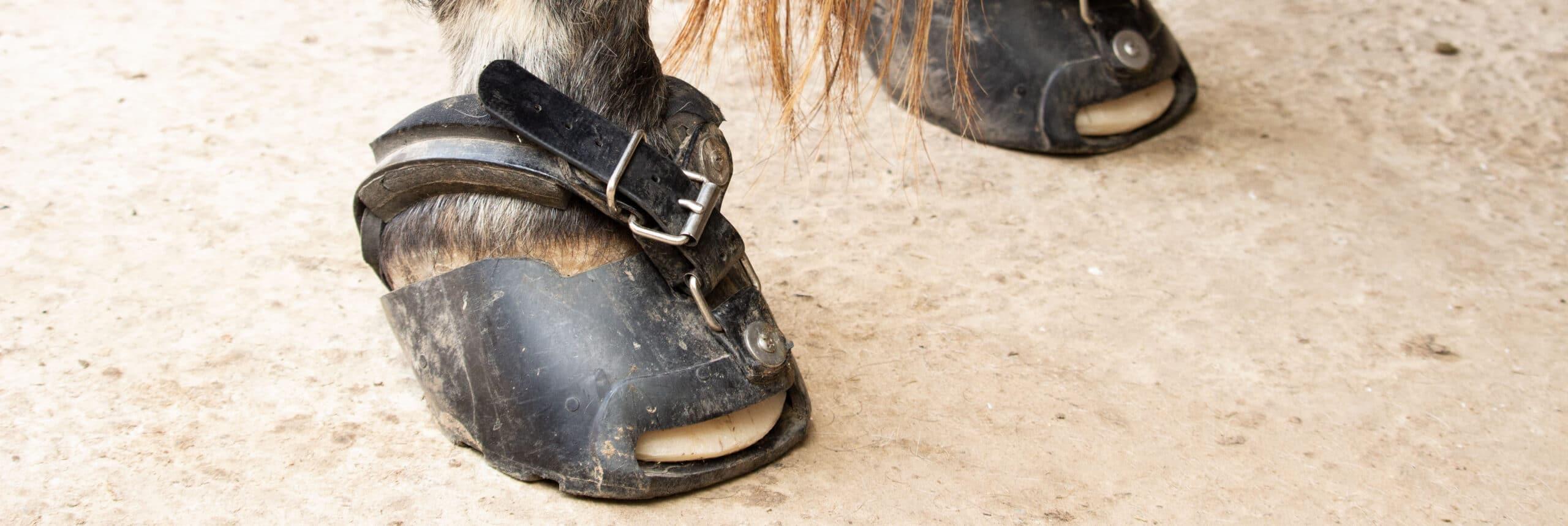 Natural Hoofcare Barhuf Hufschuhe Pferd