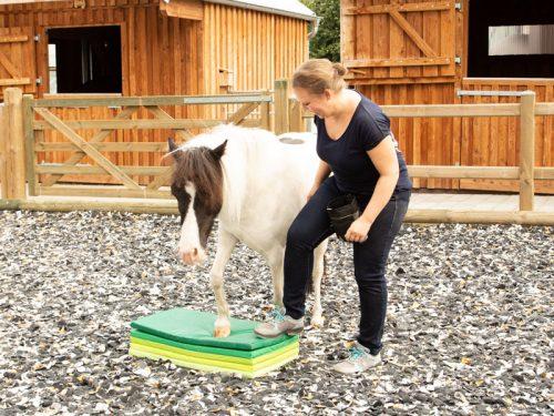 Pfergo Pferdeergotherapie Team Shettysport