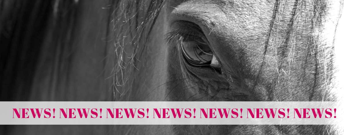 Pferdesteuer news
