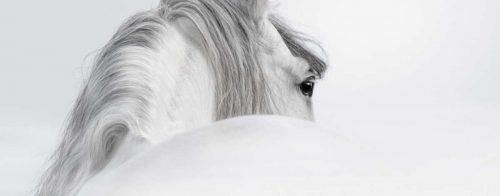 Eindecken-pferd-news-studie