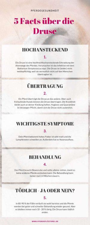 Druse_pferd-Infografik