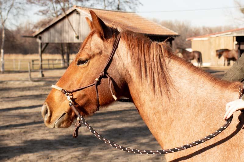 training-pferd-pause gebisslos