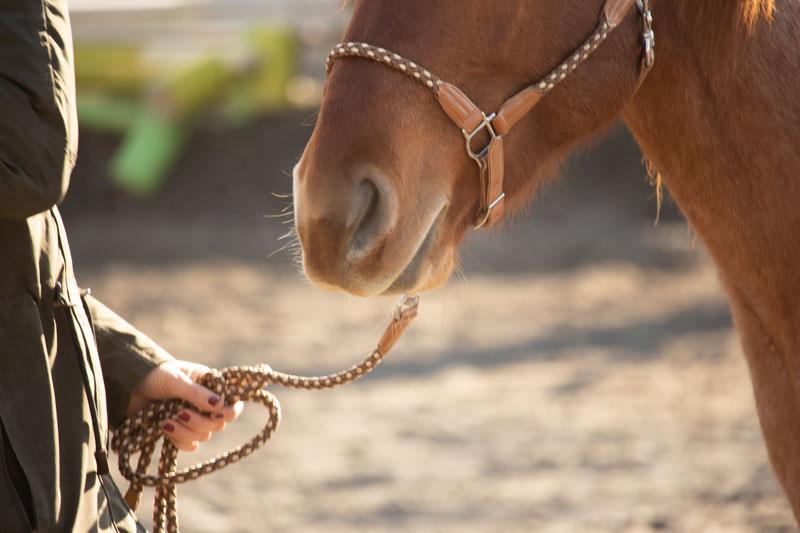 Bodenarbeit pferd