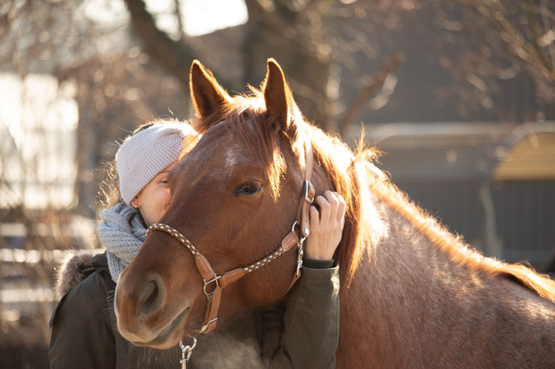 Stallhalfter pferd kratzen kuscheln