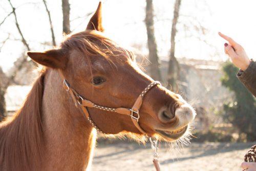 Stallhalfter pferd