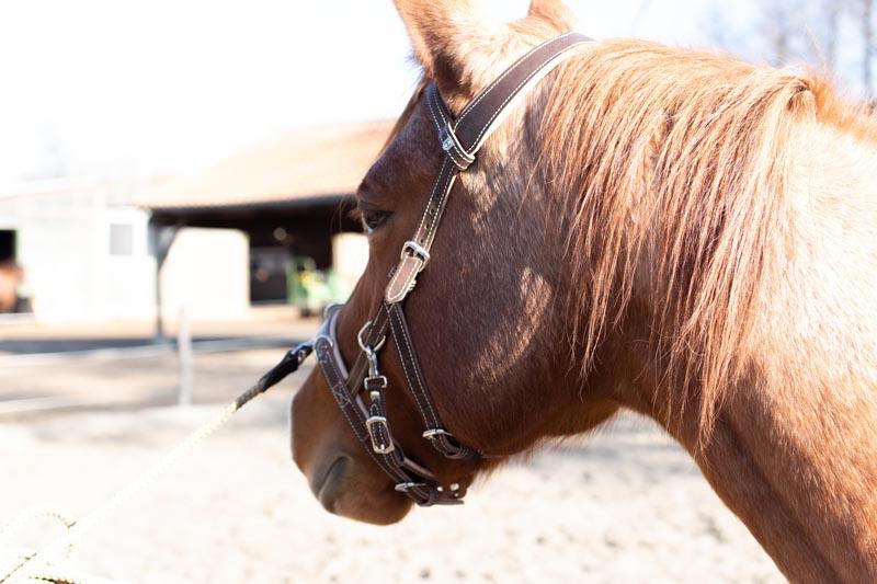 kappzaum pferd