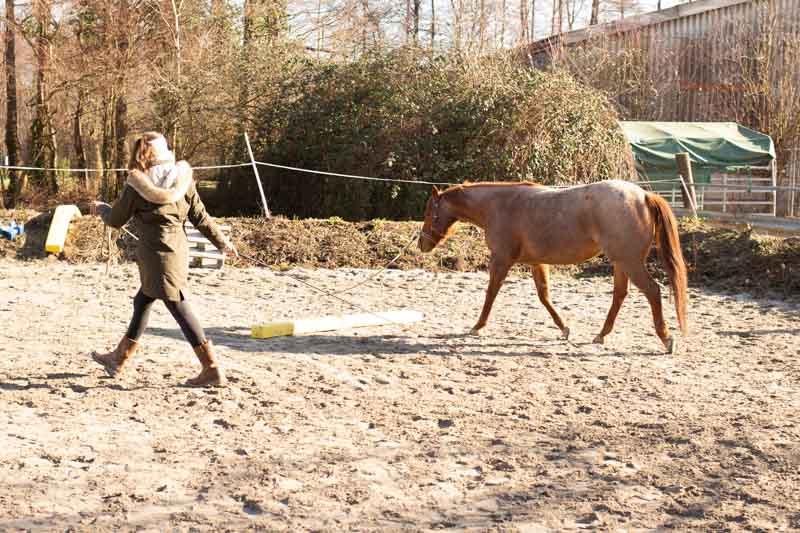Bodenarbeit pferd stangen