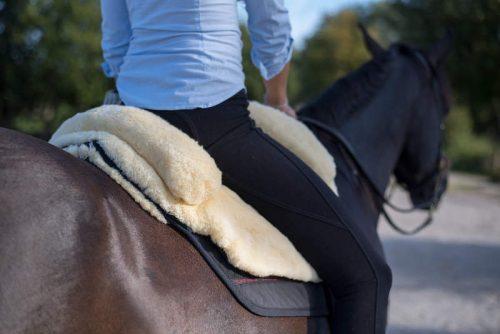 Reiten-lernen-Pferde