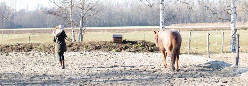training-pferd-pause