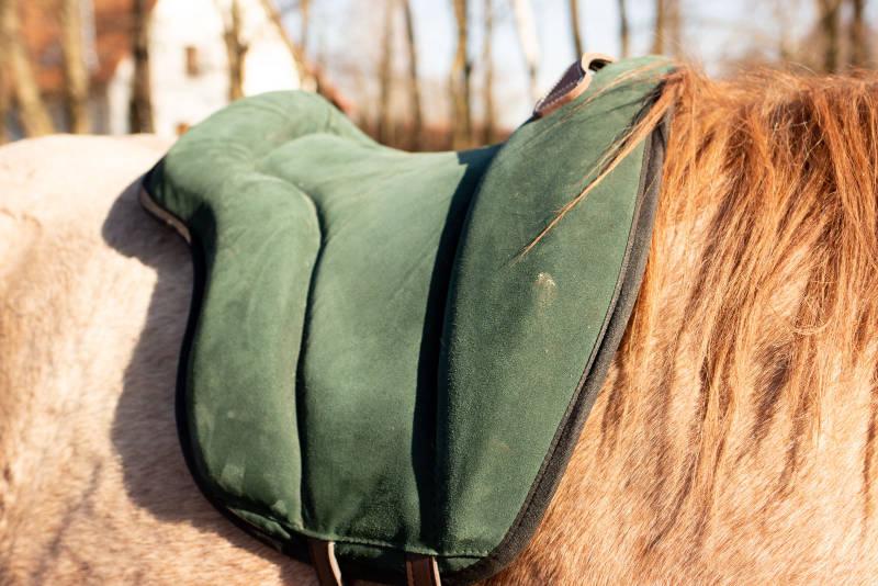 Zwei Sätze, die die Beziehung zu deinem Pferd vergiften können 2