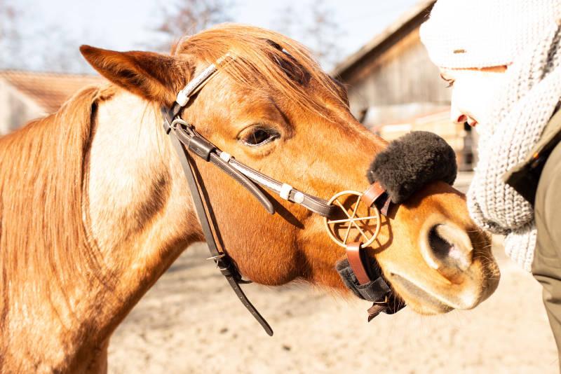 Pferd mit LG-Zaum / Glücksrad