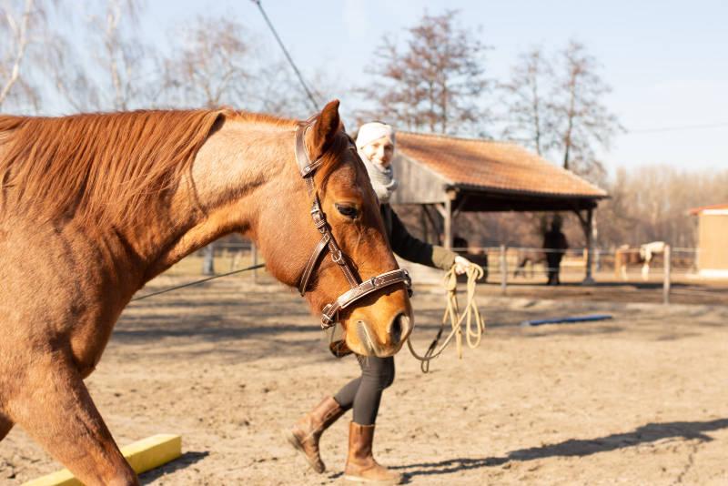 Zwei Sätze, die die Beziehung zu deinem Pferd vergiften können 5