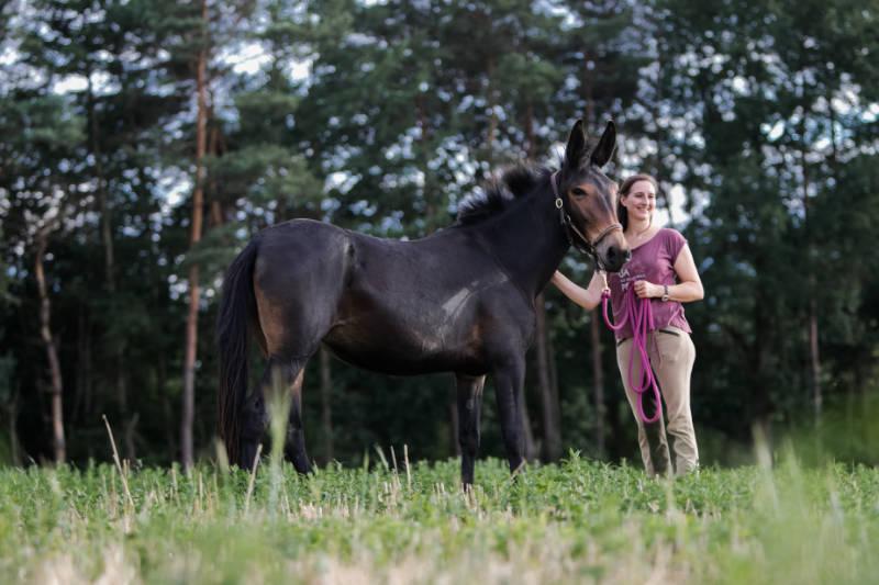 Wie du ein Pferdeführungsmensch werden kannst 2