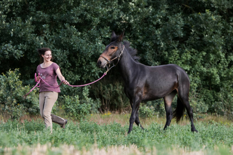 Wie du ein Pferdeführungsmensch werden kannst 4