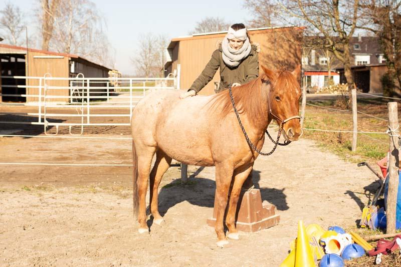How to Einparken! So bekommst du ein Pferd das perfekt still steht 5