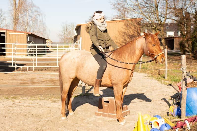 How to Einparken! So bekommst du ein Pferd das perfekt still steht 6