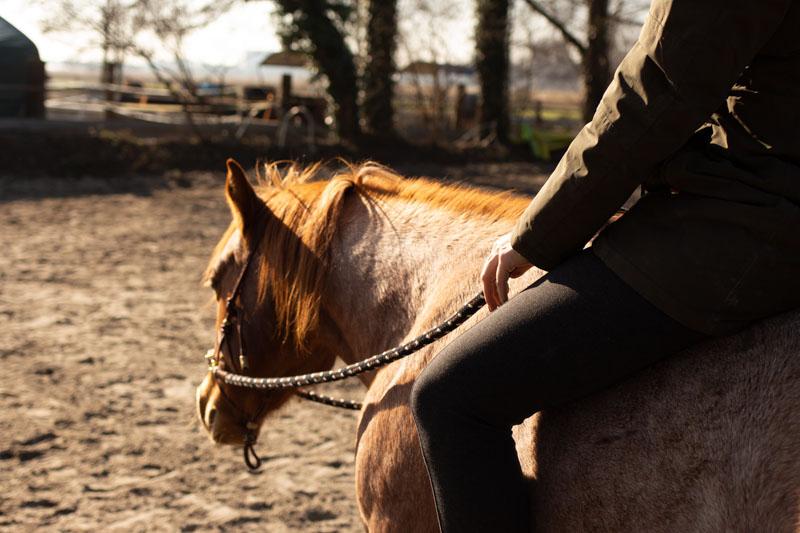 How to Einparken! So bekommst du ein Pferd das perfekt still steht 2