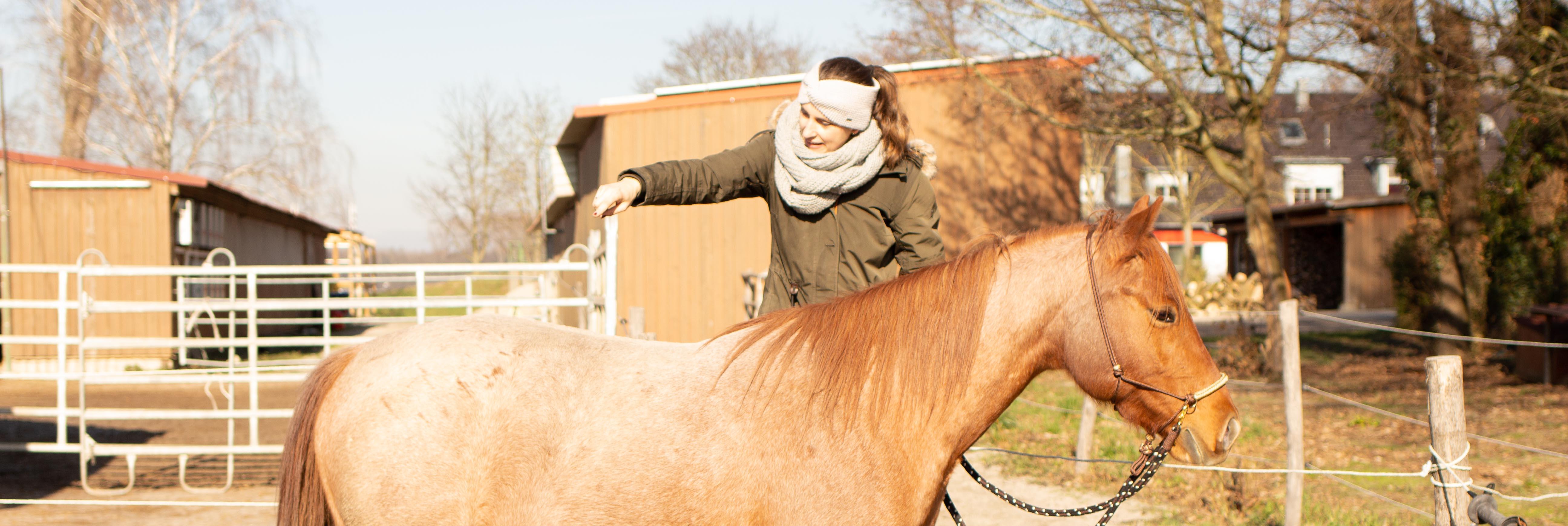 Aufsteigen EInparken Pferd CArey