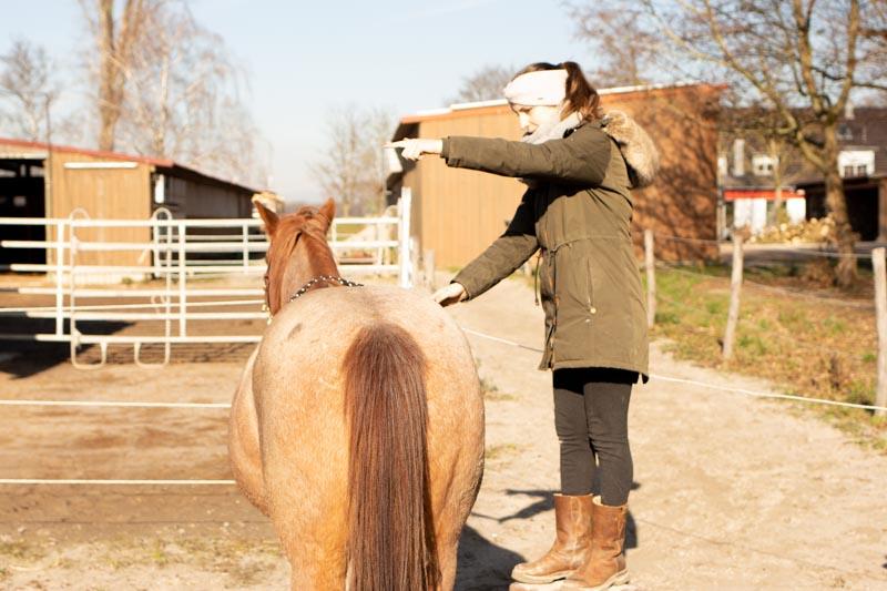 How to Einparken! So bekommst du ein Pferd das perfekt still steht 4