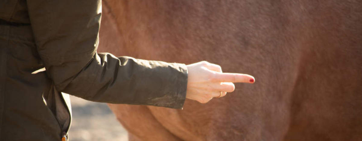 Blog-ungezogenes-Pferd
