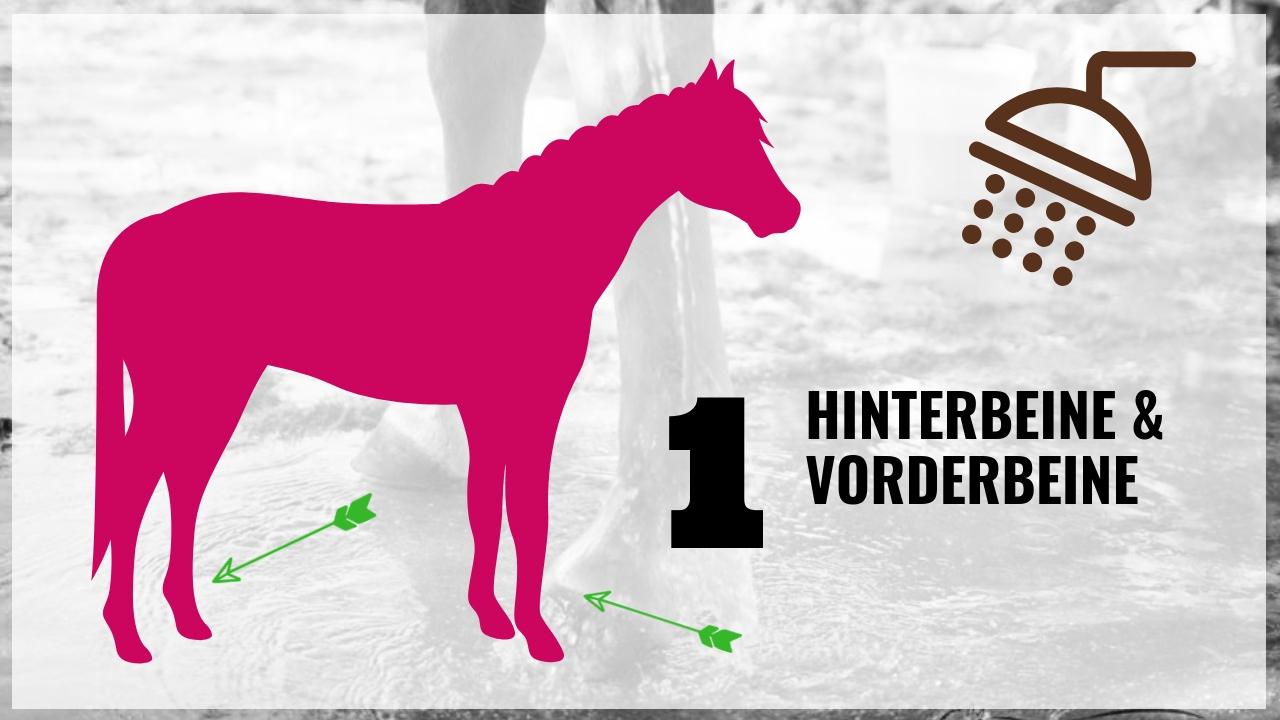 Pferd richtig waschen! Die wichtigsten 10 Schritte 3