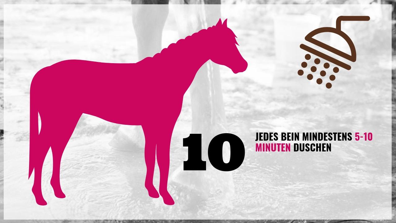 Pferd richtig waschen! Die wichtigsten 10 Schritte 4