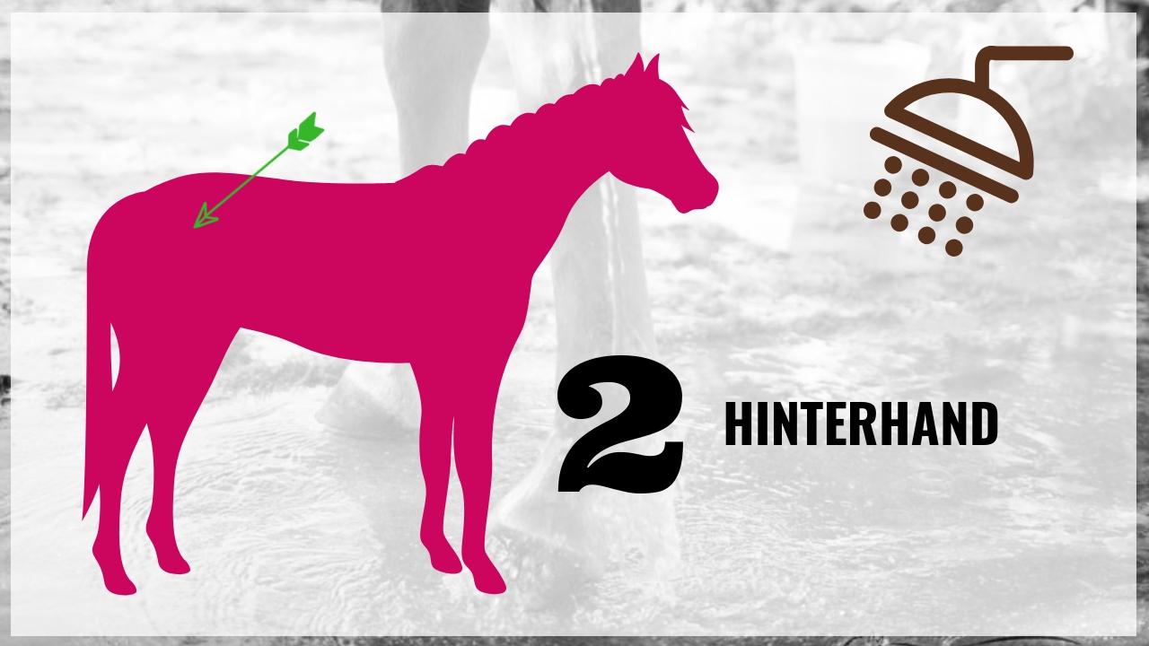Pferd richtig waschen! Die wichtigsten 10 Schritte 5