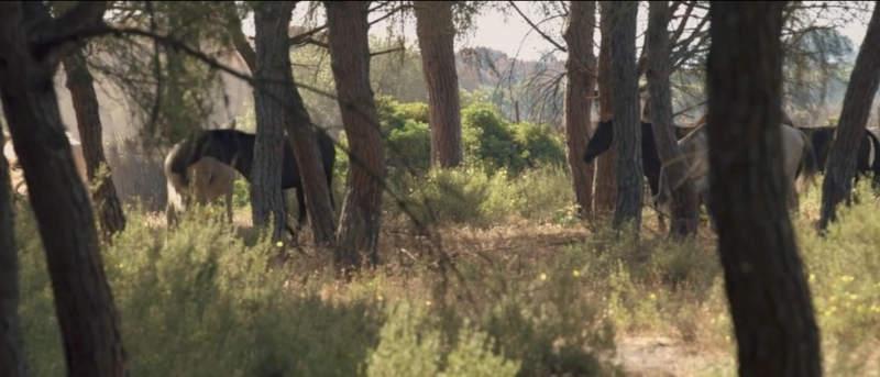 Filmtipp! Magie der Wildpferde 6