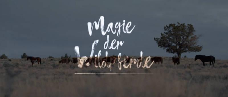 Filmtipp! Magie der Wildpferde 10