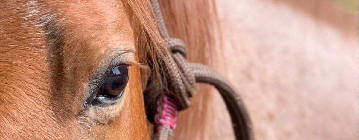 Pferdeauge und stylisches Knotenhalfter