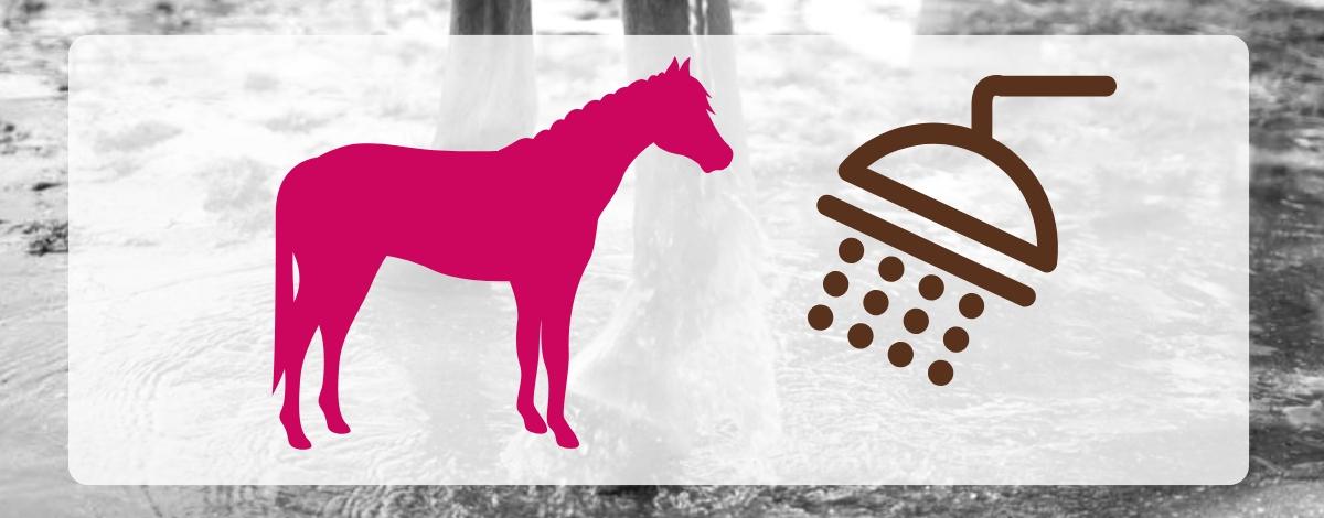 Pferd richtig duschen