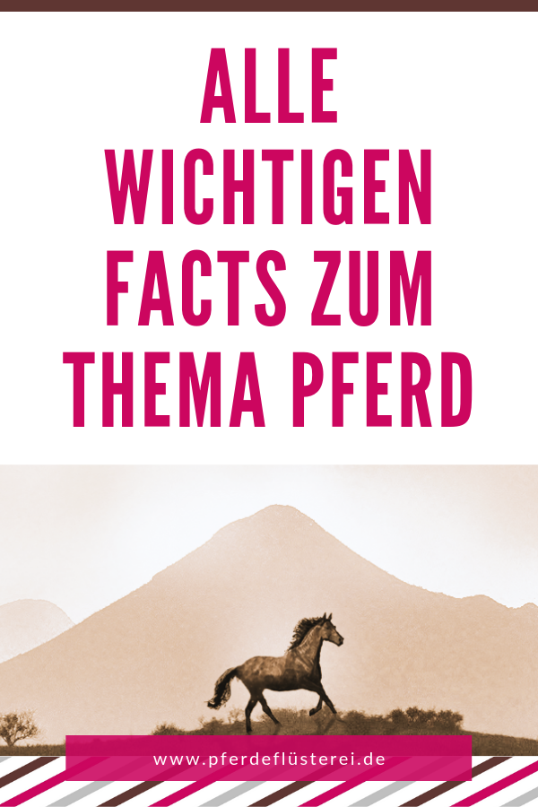 Alle wichtigen Facts zum Thema Pferd
