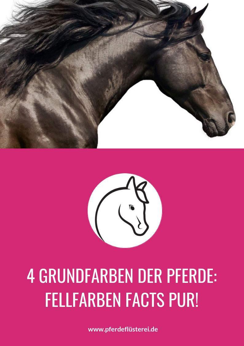 Das ABC der Fellfarben beim Pferd! Von bis A wie Apfelschimmel bis P wie Palomino 2