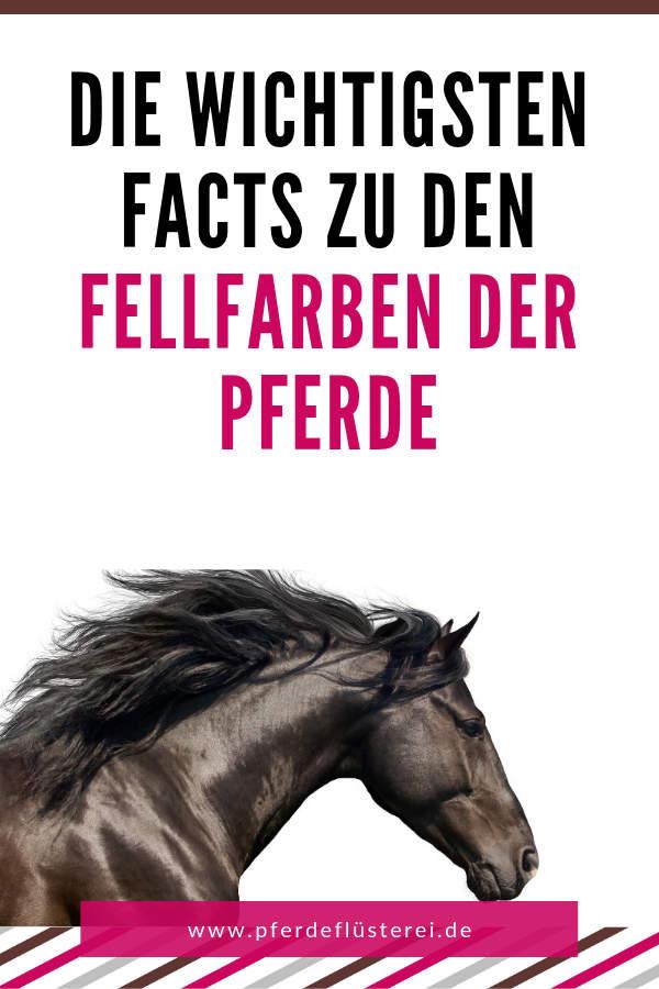 Das ABC der Fellfarben beim Pferd! Von bis A wie Apfelschimmel bis P wie Palomino 1