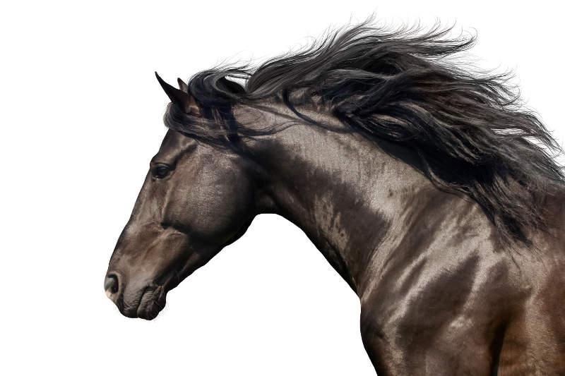 Das ABC der Fellfarben beim Pferd! Von bis A wie Apfelschimmel bis P wie Palomino 6