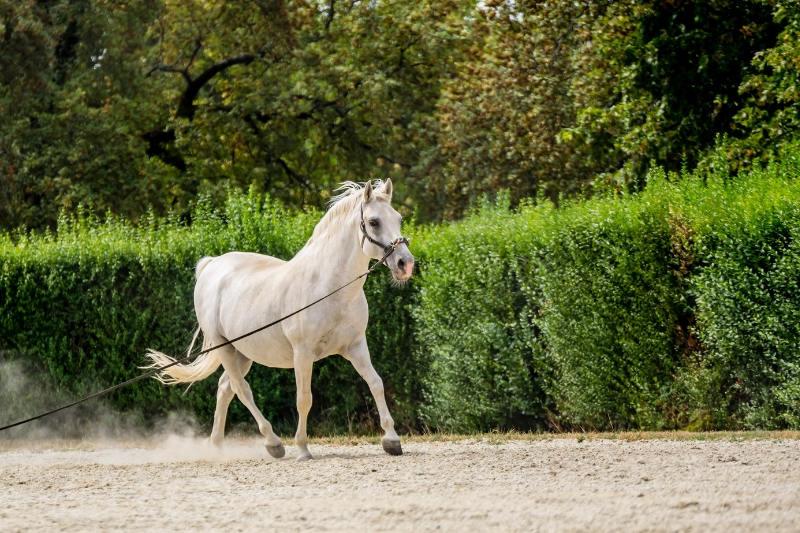 Das ABC der Fellfarben beim Pferd! Von bis A wie Apfelschimmel bis P wie Palomino 7