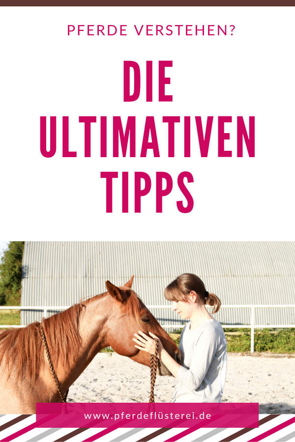Mehr ZEN! Wie du ein besserer Pferdemensch wirst 3