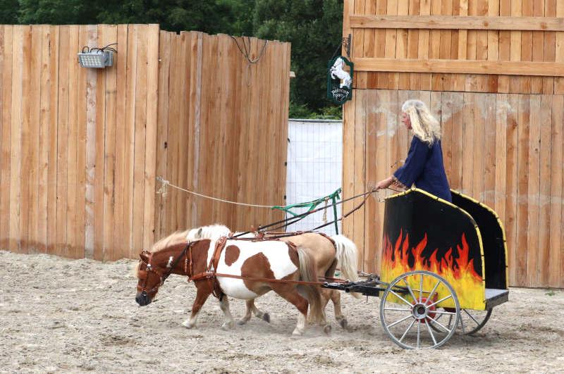 Wie du ein richtig gelassenes Pferd bekommst! Tipps von einer Stuntfrau aus ihrem Training mit Showpferden 12