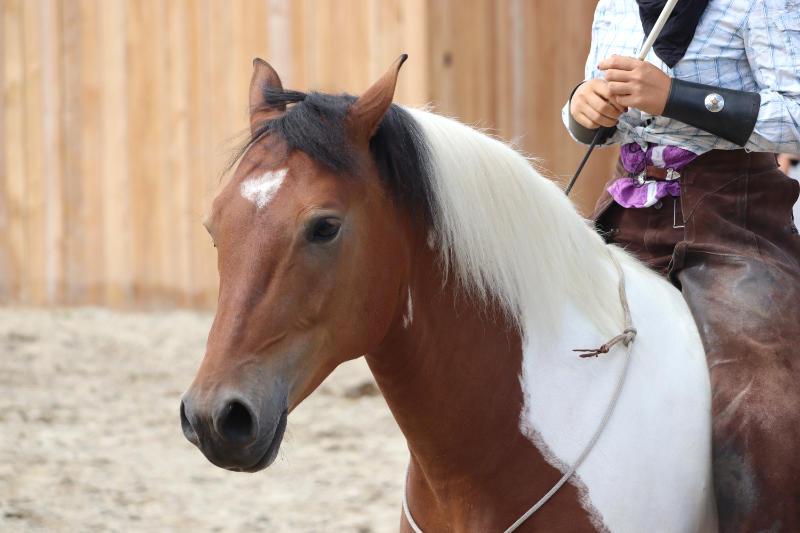 Wie du ein richtig gelassenes Pferd bekommst! Tipps von einer Stuntfrau aus ihrem Training mit Showpferden 8