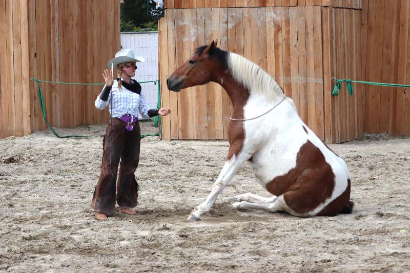 Wie du ein richtig gelassenes Pferd bekommst! Tipps von einer Stuntfrau aus ihrem Training mit Showpferden 7