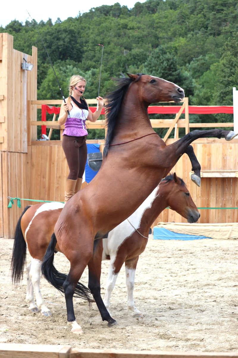 Wie du ein richtig gelassenes Pferd bekommst! Tipps von einer Stuntfrau aus ihrem Training mit Showpferden 1