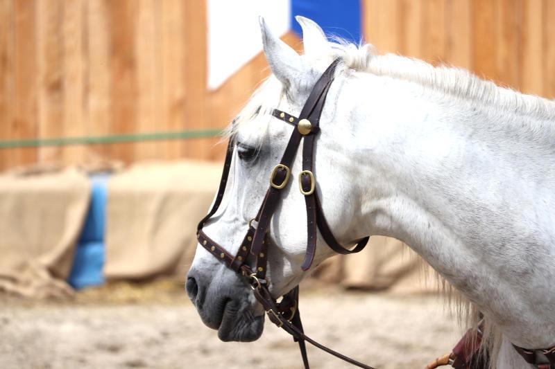 Wie du ein richtig gelassenes Pferd bekommst! Tipps von einer Stuntfrau aus ihrem Training mit Showpferden 5