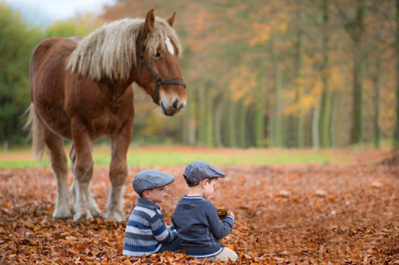 Perfect Match? Kinder und Pferde 3