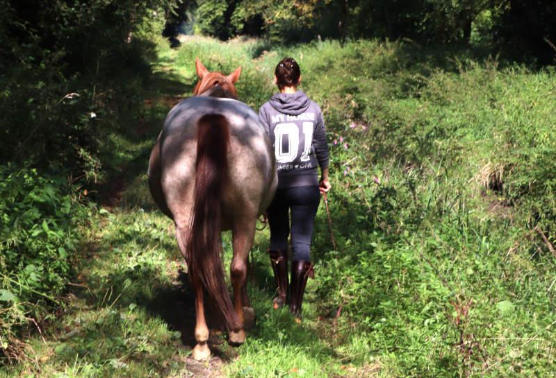 Pferd auf Signal grasen lassen! So klappt der entspannte Geländegang 1