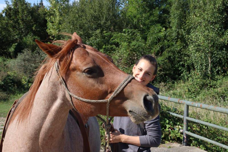 Dein eigenes Pferd - 6 Dinge, die Dir vorher keiner sagt 8