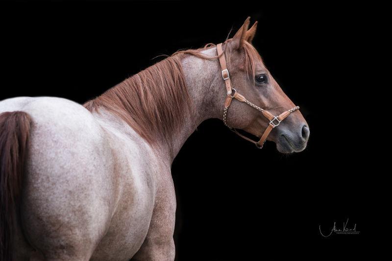 Dein eigenes Pferd - 6 Dinge, die Dir vorher keiner sagt 1