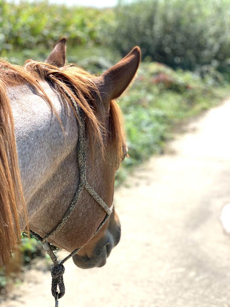Pferde reiten! Warum das keine Selbstverständlichkeit ist 5