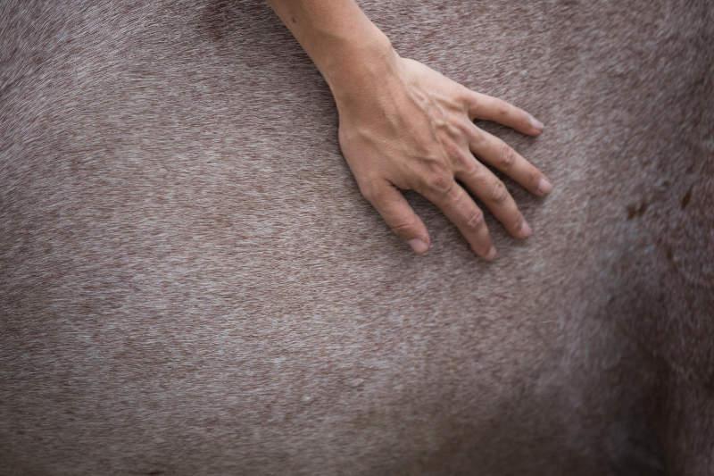 Pferdeflüsterei.de - Weil dein Pferd dich dafür lieben wird. 10