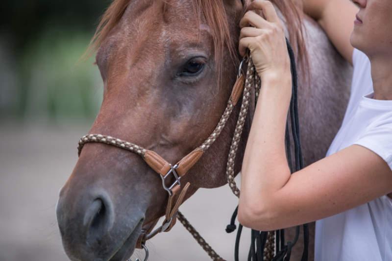 """Sattelzwang ade! So wirst du tiefsitzende Probleme deines Pferdes """"wieder los"""" 5"""