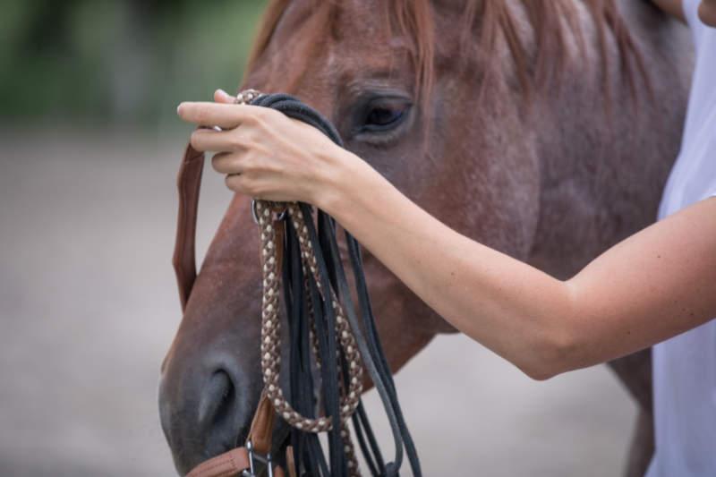 4 Tipps um Probleme mit Pferden ganz einfach zu lösen 3